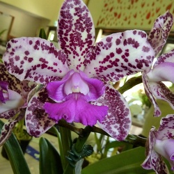 C. Penny May x Rlc. Capricorn Charm